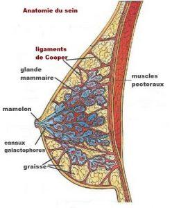 Porter un soutien gorge car l'anatomie du sein est fait tel que la poitrine reste fragile