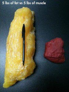 La différence entre la graisse et le muscle montre bien que le poids sur la balance ne veut rien dire